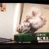 鳩が豆鉄砲(*゚∋゚)クルックー