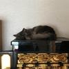 家の中を見直して、人為的ミス?猫為的ミス!?を防ごう