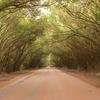 SANTA RITA 緑のトンネル