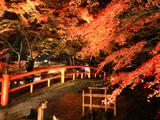 お風呂上がりに紅葉のライトアップが楽しめる!秋に行きたい温泉地5つ