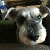【愛犬】我が家の愛犬ニコの紹介