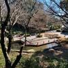 横浜市こども植物園の池(神奈川県横浜)