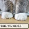 猫雑記 ~むくの退屈~
