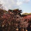 京都のお散歩 『北野天満宮』 2017梅の時期はまだ間に合うのか?