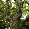 樹木の撮り方 カメラの勉強メモ 遠賀郡遠賀町島津