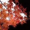 11月、紅葉の湯西川温泉へ