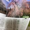 日本一の千年枝垂桜!福島県・三春の滝桜2019(昼編)