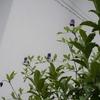 6月3日の庭