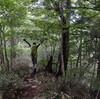 八田さんの自家旅「面河山」 涼風の森