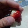 イチゴのツブツブをゴマに変えたらどうなるのか?