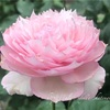 【庭】多分二番花なやつ