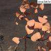 #23 ユーカリ ポポラスの葉が茶色くなって落ちました