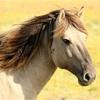 馬プラセンタサプリ