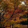 猿江恩賜公園の紅葉