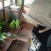 【昆虫注意!!】バリ・バタフライパークおよび青森の幼虫グミ