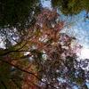 紅葉と空 大田黒公園