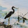 フロリダの水鳥を見て帰国