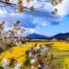 【新潟写真】上堰潟公園からの弥彦山 2020年4月11日