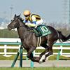 2018年チューリップ賞 GⅡ -阪神JFでの人気馬または成績上位馬は堅実に走る-