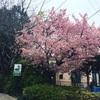 【御朱印プチ情報】今年も野田の櫻木神社は大賑わい。さくらの日限定御朱印【さくらさく】【サイクリング日和】