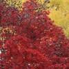 紅葉の新宿御苑