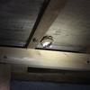 浜松市で床下にできたスズメバチの巣を駆除してきました!