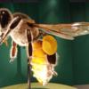 国立科学博物館 特別展「昆虫」