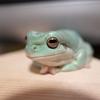 雑雑読書日記24 カエルを飼っている
