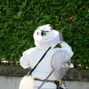【スズメバチの巣を駆除してもらった】低料金で信頼できる業者がおすすめ!大阪、京都、兵庫等に住んでるなら必読!