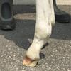 育成馬ブログ(生産編①) その2