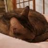 猫のしっぽマフラー☆ニケちんバージョン