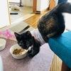 【子猫】ちょこちゃんのご飯のストックを紹介!ごはん収納のアドバイスください。