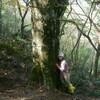 烏帽子岳~ダイラ  三国のぶな再訪  2006.10.28