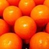 旬の完熟金柑はそのまま食べるべし、品種や食べ方から健康効果までを知る!