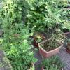 ベランダお庭がジャングルになってしまった‼︎