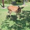[奈良公園]で鹿の世界にお邪魔して[東大寺]で世界規模の国宝を眺める!