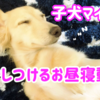 子犬マイティを寝かしつける動画 カニンヘンダックス 7ヶ月2週目