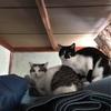 猫とwaltzと、、、