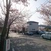 池田高校付近の桜 @池田市