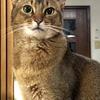 【猫さんと暮らす】猫が幸せだったら問題ナシ【名言】