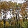 ベッドのようにフカフカ♪お山全体は落ち葉で敷き詰められ ブナの実が沢山落ちています。