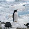 おすすめSFファンタジー「ペンギン・ハイウェイ」で不思議な冒険