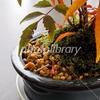 ハゼノキ 盆栽
