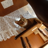 猫さんの洋服