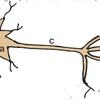 今こそ確認しておくべき。ニューロンの仕組み