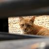 立ち入り禁止区域の野良猫