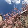 2021年3月:マリオットプラチナ&チタン修行81・82泊目(+2泊)~ザ・プリンス京都宝ヶ池・桜の時期はお勧めです。