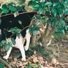 MD TELE ROKKOR 135㎜ F2.8で野良猫撮影