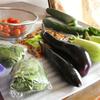 夏野菜。実家でもらう幸せ