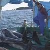 NHK ETV特集「鯨の町に生きる」